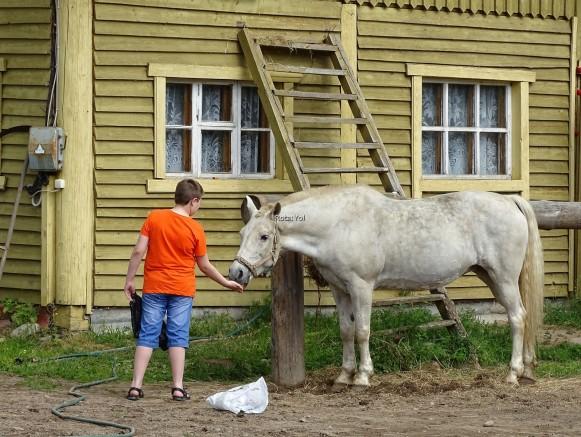 Turistler bile elle besliyor bu güzel atı