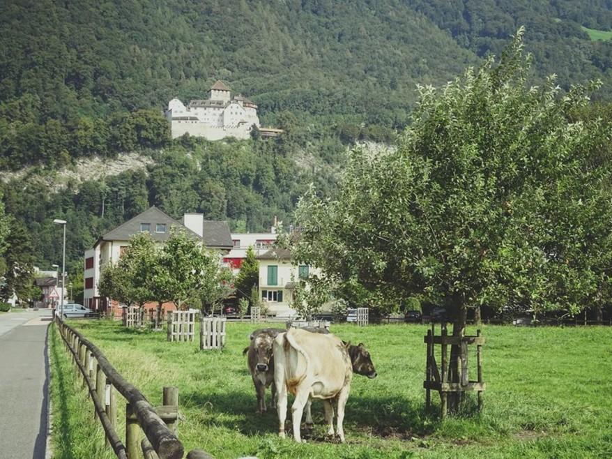 Başkent Vaduz. Tepedeki Prensin Sarayı